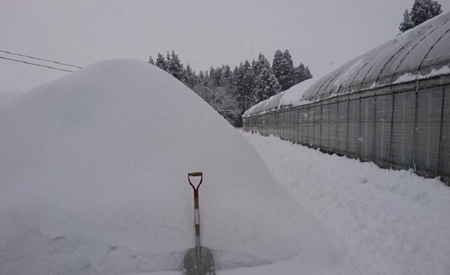 冬はハウスを守るために除雪作業が欠かせません