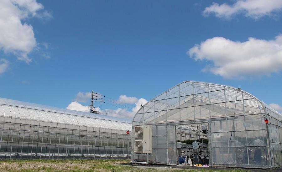 環境制御可能なハウスで夏イチゴ栽培を最適化