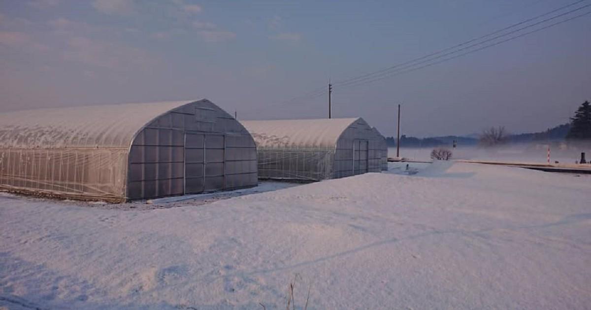 2019年の夏イチゴ農園
