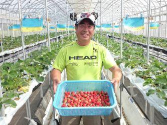鮮度を守るための工夫。早朝収穫や発送直前まで予冷ができる専用冷蔵庫により、夏イチゴの命と言える鮮度を守っています。