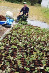 苗の自社生産。生産した苗は一部、ご家庭用にも販売しております。Lineを使った栽培相談も受け付けております。